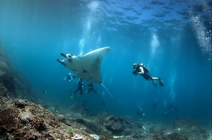 Nusa Penida Snorkelling 4 Location, Manta Ray Snorkelling