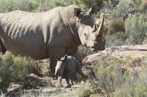 Big 5 Safari Half Day- Aquila Game Reserve