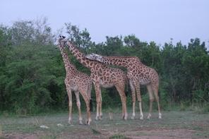 4 Days Animal Kingdom - NAIROBI