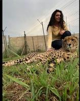 Private Safari of De Wildt Cheetah and Wildlife Centre