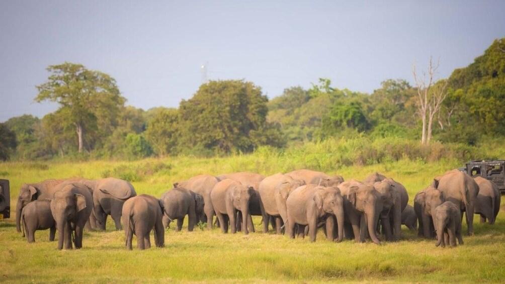 Show item 3 of 10. Sri Lanka Big Five Game & Luxury Camping - 7 Days