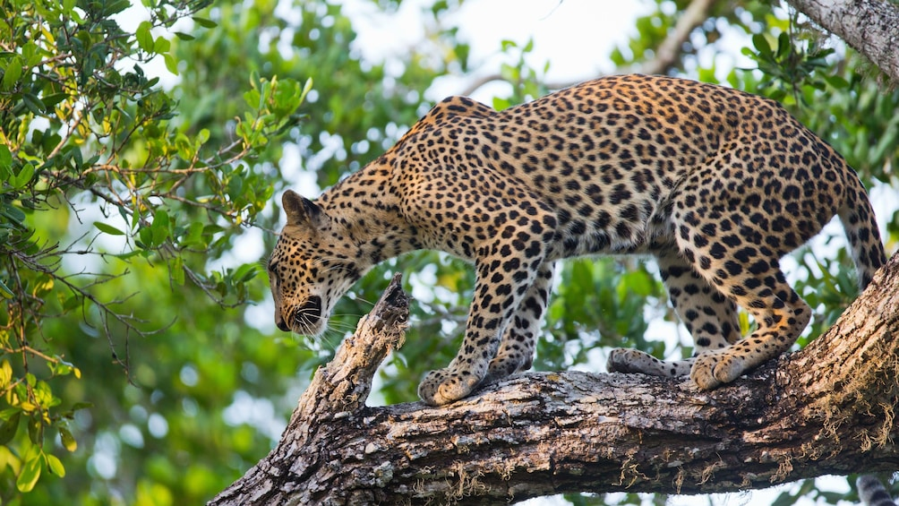 Sri Lanka Big Five Game & Luxury Camping - 7 Days