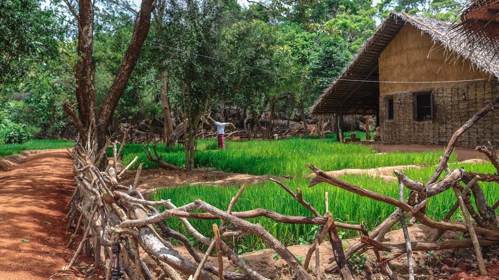 Show item 2 of 10. Sri Lanka Big Five Game & Luxury Camping - 7 Days