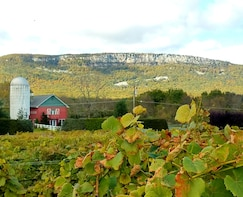 Fall Foliage Wine Tour in the Hudson Valley