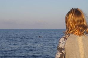 Mallorca: 2.5-Hour Sunrise Catamaran At Sea & Dolphin Tour
