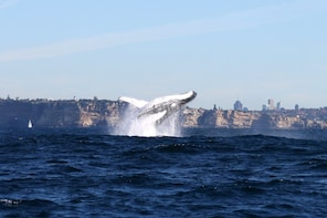 Whale Watching Cruise with Sydney Harbour Explorer Cruise