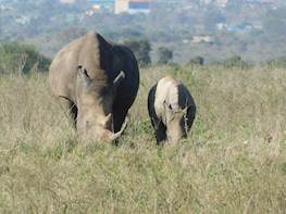 6 Days Kenya Allround Safari - NAIROBI