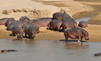 6 Days Kenya Allround Safari - Mombasa