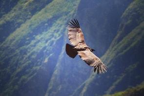 Chonta Condor Canyon tour (Private Service)