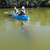 Manatee and Dolphin kayak tour Haulover canal (Titusville)