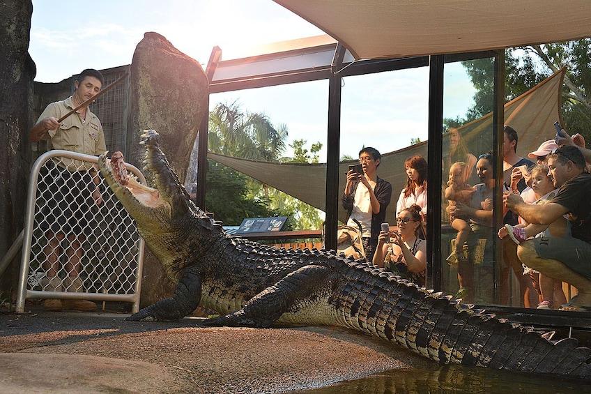 People watch through window as zookeeper feed crocodile on Hamilton Island