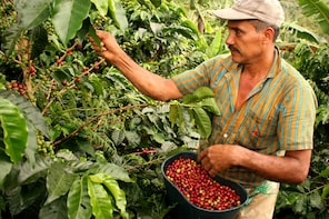 Colombia Coffee Tour - Discover what is behind a good coffee