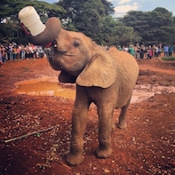 Baby Elephant Orphanage Half Day Tour