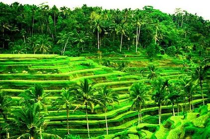 Amazing Private Tour Package-Rice Terrace-Batur Volcano