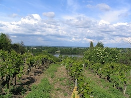 Must Taste - Private full day in the Loire Valley LVT-PD5
