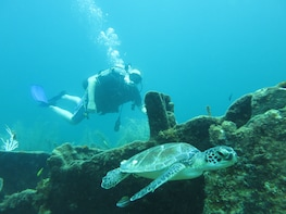 Bucket List Scuba Diving - The 4 Hour Passage To SCUBA Dive