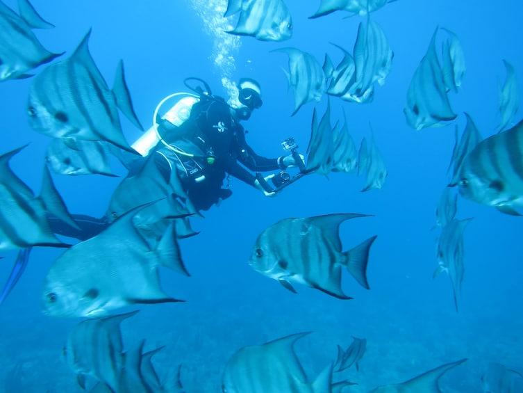 Show item 10 of 10. Bucket List Scuba Diving - The 4 Hour Passage To SCUBA Dive