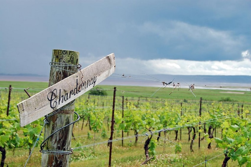 Show item 1 of 5. Private Vineyards of Nova Scotia