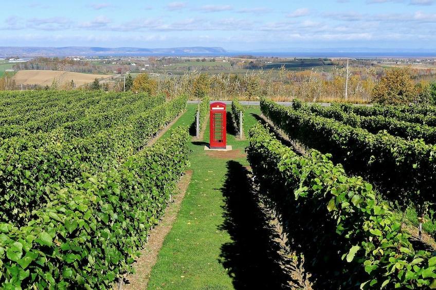 Show item 4 of 5. Private Vineyards of Nova Scotia