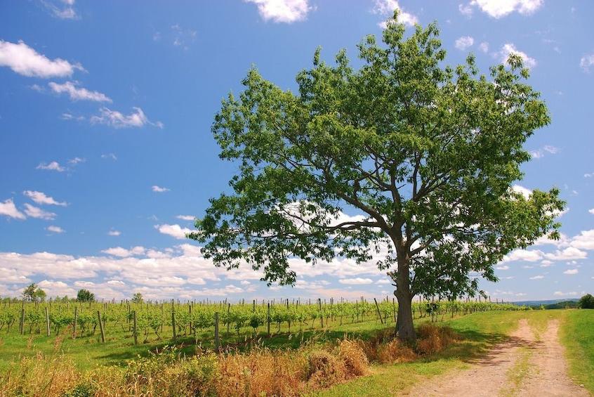 Show item 2 of 5. Private Vineyards of Nova Scotia