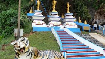 The Wonders of Thailand's Last Lowland Rainforest