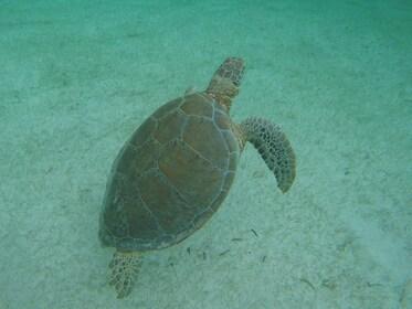 marine-turtles-tour-akumal-mexico-snorkel-tour.png