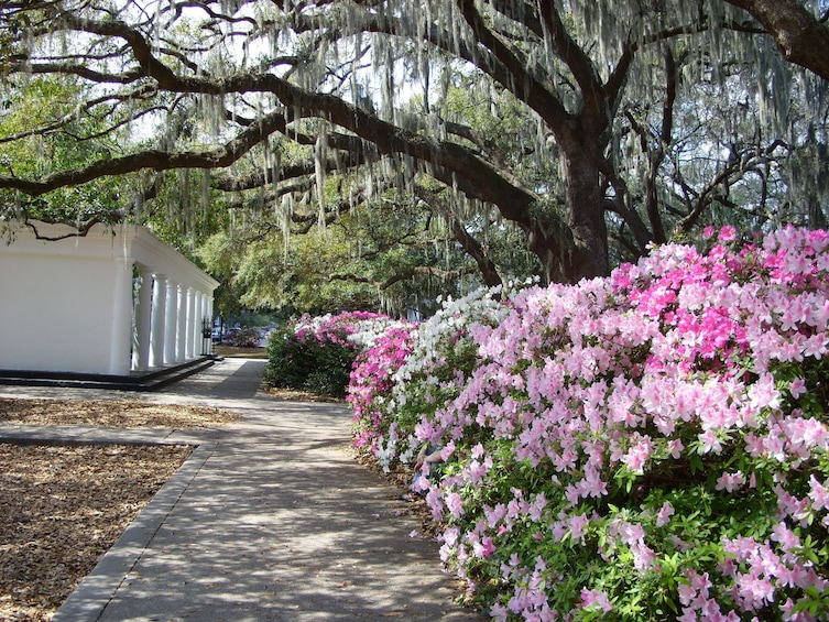 Show item 2 of 5. Stroll with a local through Savannah's Historic District