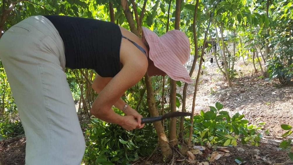 Private Cinnamon Experience in Hikkaduwa