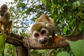 Monkey Land & Zip Line Combo Tour Full Day