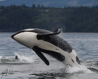 Vancouver Island Half Day Whale and Wildlife Adventure