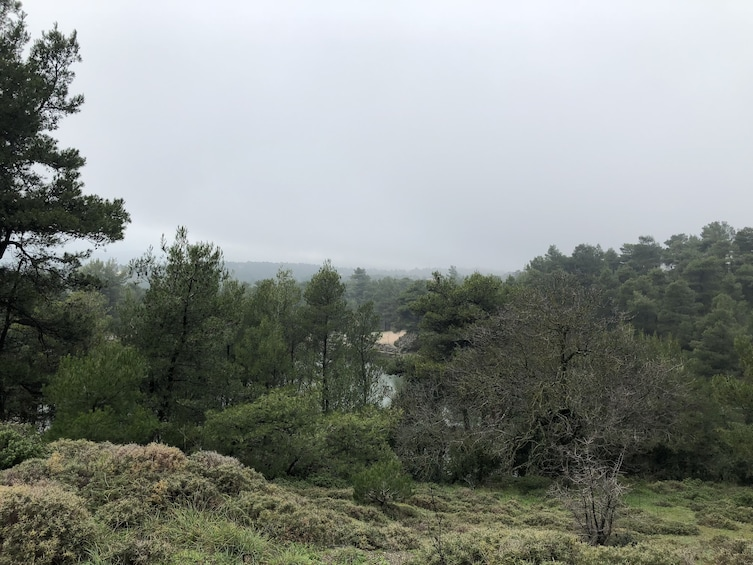 Forest in Parnitha Mountain Park