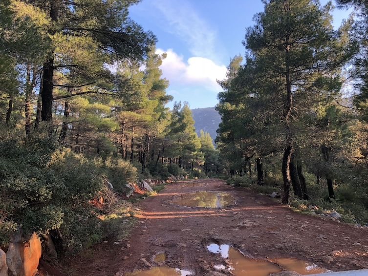 Dirt road surrounded by trees in Parnitha Mountain Park