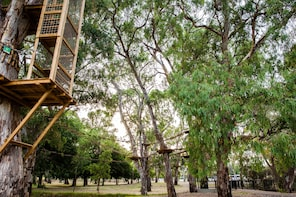 TreeClimb Adelaide Inner-City Aerial Course - Grand Course