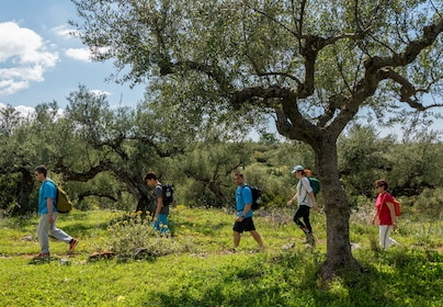 Explore Messinia - hiking- Kardamili (14 of 13).jpg