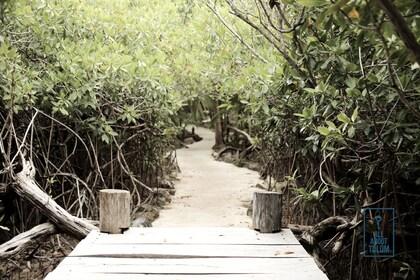mangroove.jpg