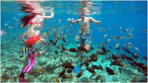 Snorkeling at Gili Island.jpg