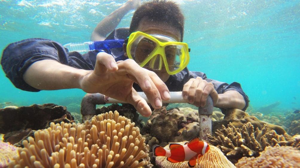 Show item 5 of 7. Snorkeler inspects small fish in the Gili Islands