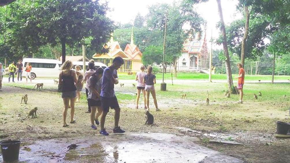Show item 3 of 8. One Day Tour Khao Sok Jungle Safari from Krabi