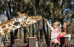 Taronga Western Plains Zoo - Dubbo