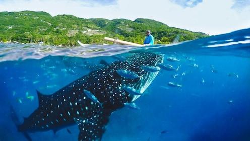 Oslob Whale Shark & Canyoneering Adventure
