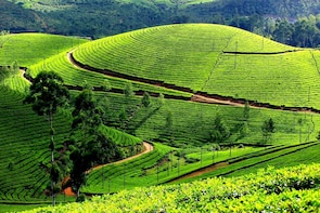 Munnar City tour (Pickup from Hotel)