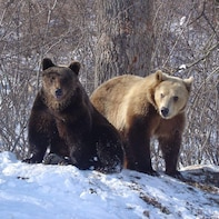 Libearty Bears Sanctuary & Dracula's Castle tour in one day