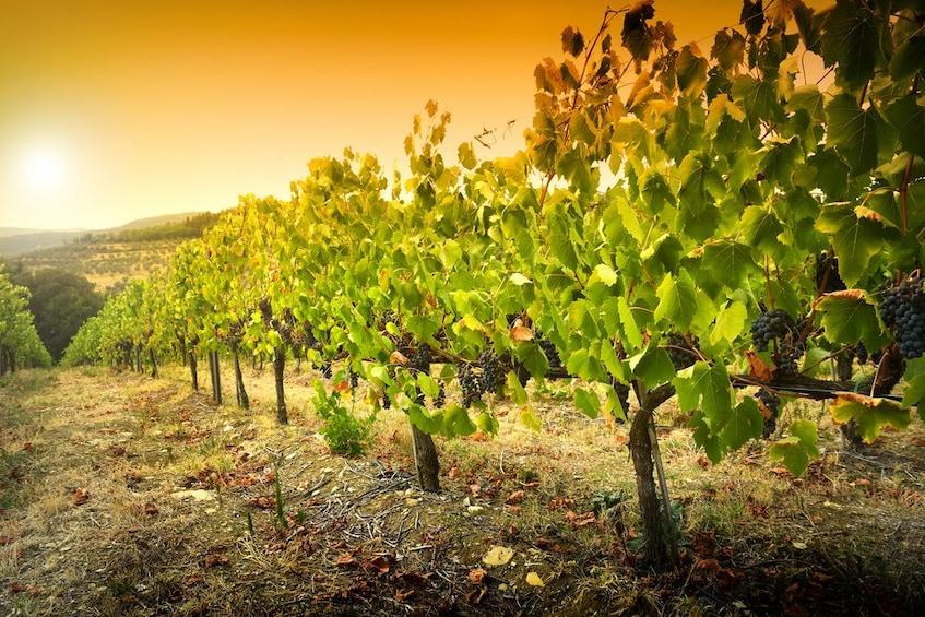 Show item 3 of 5. Verona: Amarone Wine Tasting Tour in Valpolicella