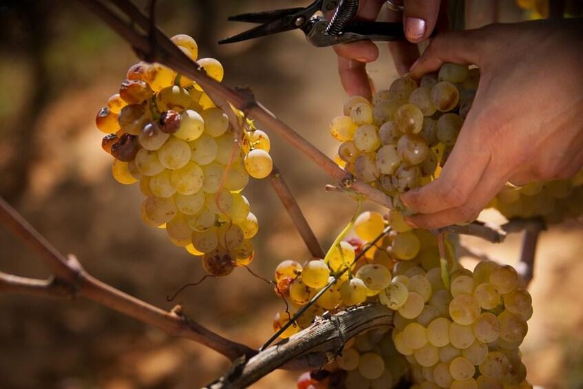 Show item 4 of 5. Verona: Amarone Wine Tasting Tour in Valpolicella