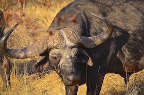 Hluhluwe Imfolozi Safari & Dumazulu Village Private Tour