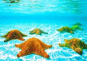 3 Stop Snorkel Adventure Shipwreck, Sea Stars & Blue Channel