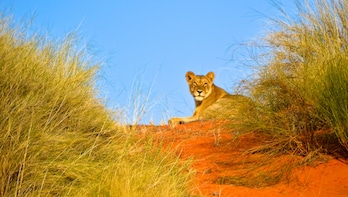 Hluhluwe Imfolozi Safari & Emdoneni Wild Cat Private Tour