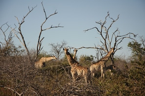 AMAZING SAFARI IN SOUTH AFRICA -10 Days /9 Nights