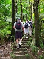 Saint Lucia Rainforest Tour