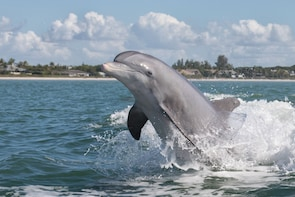 Dolphin Safari and Scenic Tour (Boat Tour)